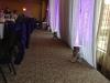 Magenta_wedding_JSI_3
